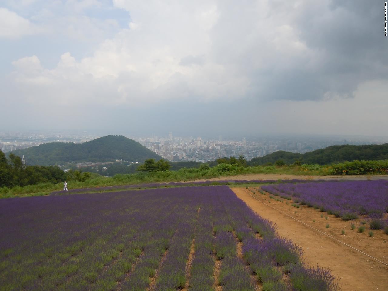 The Lavender Garden at Horomitoge in Sapporo [Horomi pass]