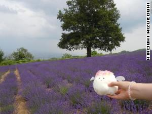 Fleemy with a lavender!