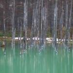 Outstanding Blue: Aoiike(青い池) in Biei