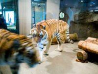 Evolving Zoo, Maruyama Zoo in Sapporo