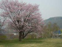 Makomanai Park(真駒内公園)