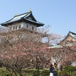 Matsumae Sakura Festival Start on April 29 2015(松前桜祭り)