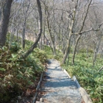 Noboribetsu Virgin Forest(登別原生林)