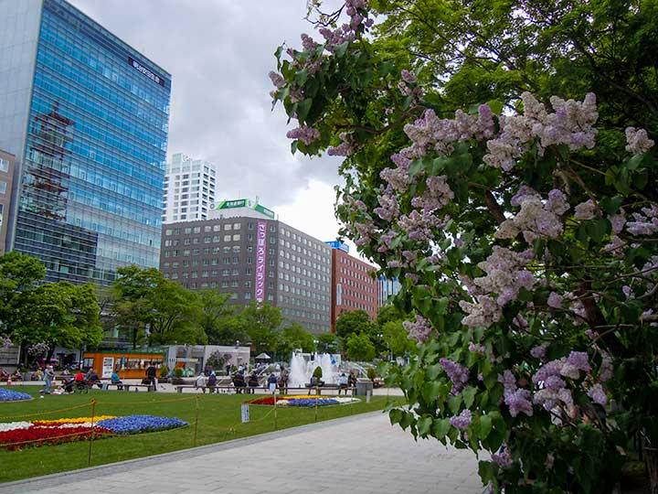 Ramen, Hokkaido wine and Local and World Foods in Odori Park, Sapporo Lilac Festival 2015