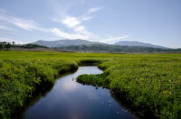 Uryunuma Marsh, the paradise of alpine plants