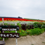 Kanno Farm in Kamifurano