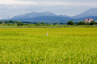 Route 275, A Beautiful Country With Rice field