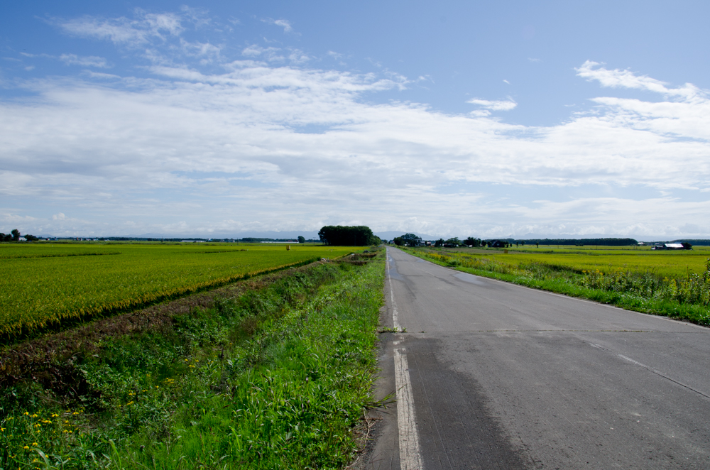 Route 275, A Beautiful Country With Ricefield