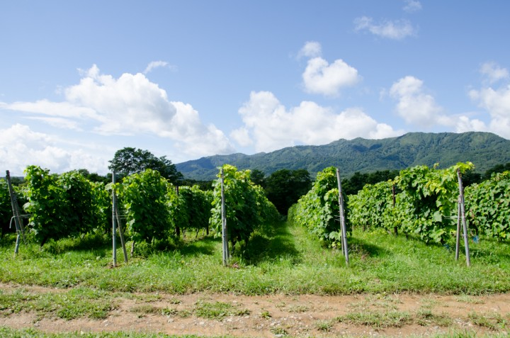 tsurunuma-winery20150905-3