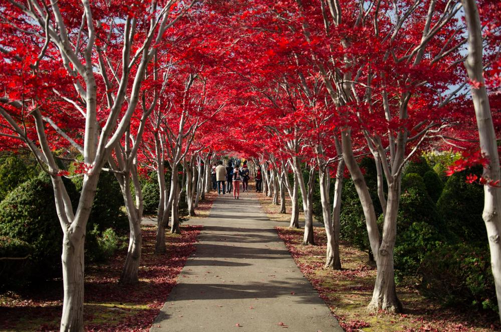 Autumn leaves in Hiraoka Jyugei Center